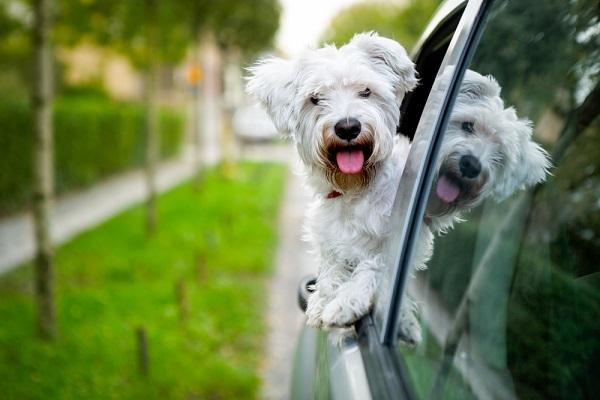 Consejero Legal transporte de mascotas en tu vehículo